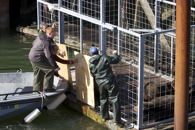 Workers opening up disentangle cage