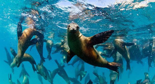 Sample PEARL Sea Lions
