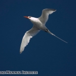 Red-billed tropic bird at the Costa Rica Dome