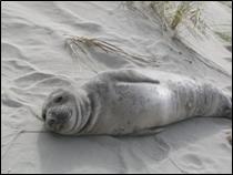 Stranded seal